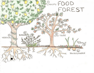 food forest 1397590738964